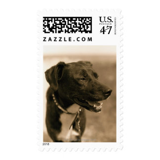 Portrait of Dog Outdoors Stamp
