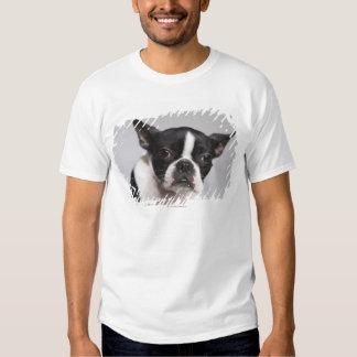 Portrait of dog tee shirt