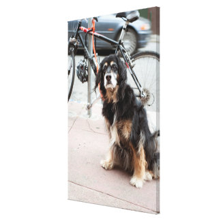 Portrait of dog waiting expectantly for owner; canvas print