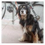 Portrait of dog waiting expectantly for owner; ceramic tile