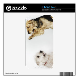 Portrait of dog waving at another dog decal for iPhone 4