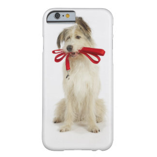 Portrait of Dog with Leash Barely There iPhone 6 Case