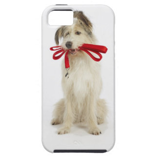 Portrait of Dog with Leash iPhone SE/5/5s Case