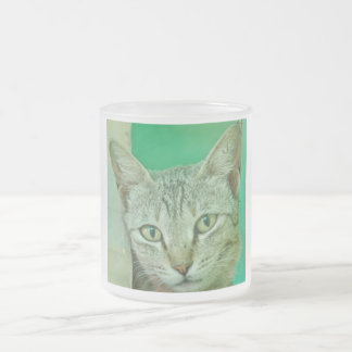 Portrait of domestic cat frosted glass coffee mug