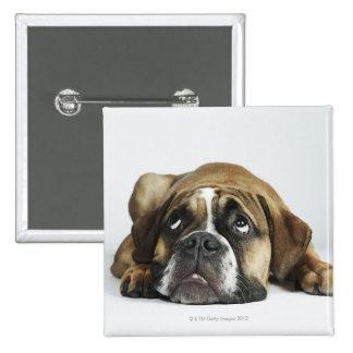 Portrait of Dorset Old Tyme Bulldog Pinback Button