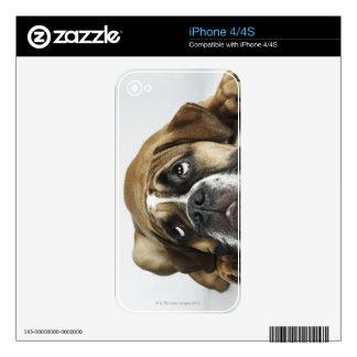 Portrait of Dorset Old Tyme Bulldog Skin For iPhone 4S
