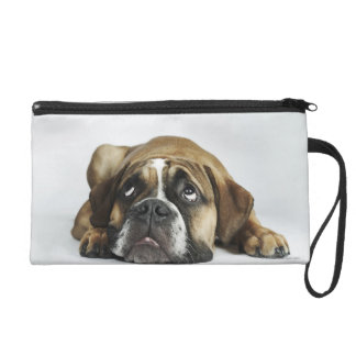 Portrait of Dorset Old Tyme Bulldog Wristlet