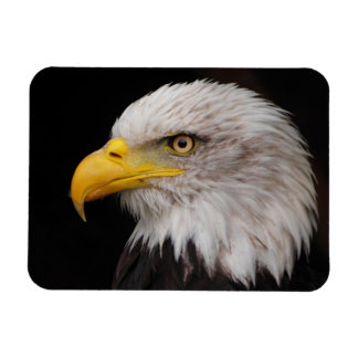Portrait of eagle magnet