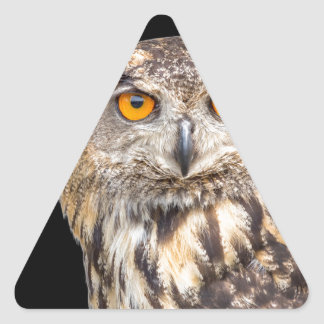 Portrait of eagle owl on black background triangle sticker