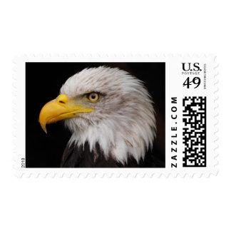 Portrait of eagle postage