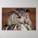 Portrait of Eurasian Eagle-Owl Print
