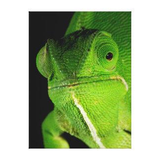 Portrait Of Flap-Necked Chameleon Canvas Print