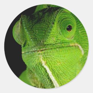Portrait Of Flap-Necked Chameleon Classic Round Sticker