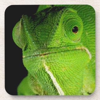 Portrait Of Flap-Necked Chameleon Drink Coaster
