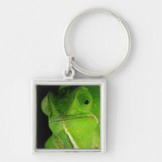 Portrait Of Flap-Necked Chameleon Keychain