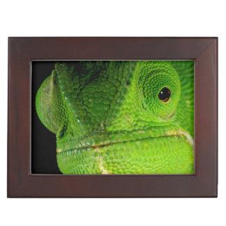 Portrait Of Flap-Necked Chameleon Memory Box