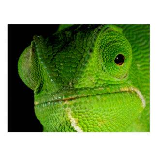 Portrait Of Flap-Necked Chameleon Postcard