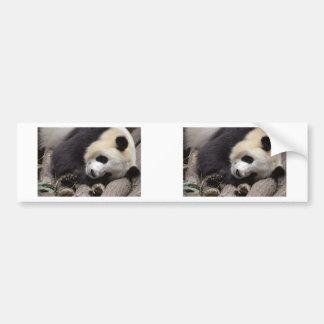 Portrait of giant panda bumper sticker