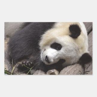 Portrait of giant panda rectangular sticker