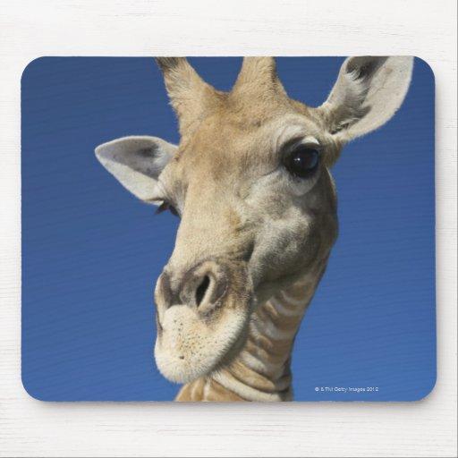 Portrait of Giraffe (Giraffa Camelopardalis) 2 Mouse Pad