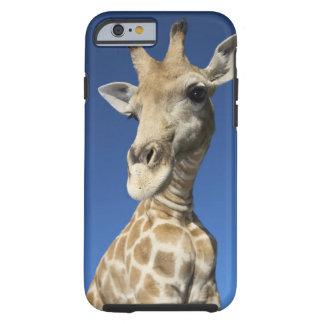 Portrait of Giraffe (Giraffa Camelopardalis) 2 Tough iPhone 6 Case