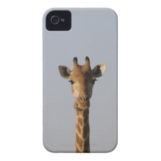 Portrait of Giraffe (Giraffa camelopardalis) iPhone 4 Case-Mate Case
