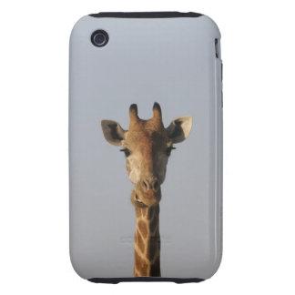 Portrait of Giraffe (Giraffa camelopardalis) Tough iPhone 3 Covers