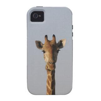 Portrait of Giraffe (Giraffa camelopardalis) Vibe iPhone 4 Cases