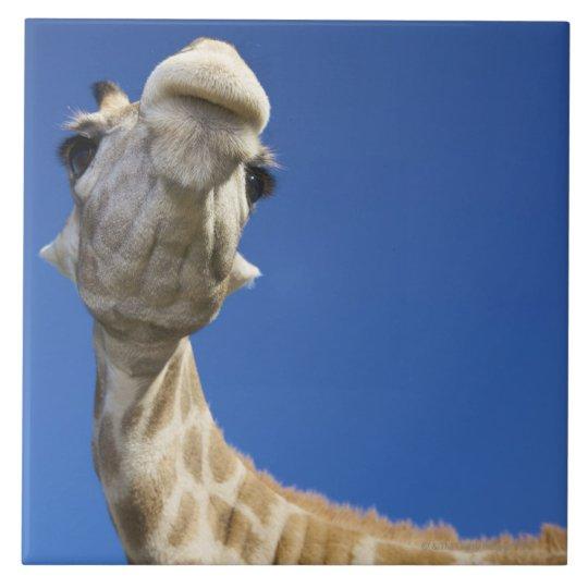 Portrait of Giraffe (Giraffa Camelopardalis) Ceramic Tile