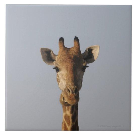 Portrait of Giraffe (Giraffa camelopardalis), Ceramic Tile