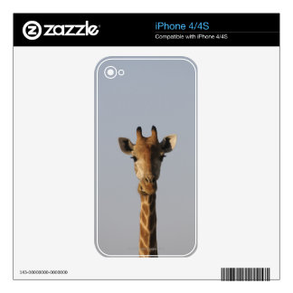 Portrait of Giraffe (Giraffa camelopardalis) iPhone 4S Decal