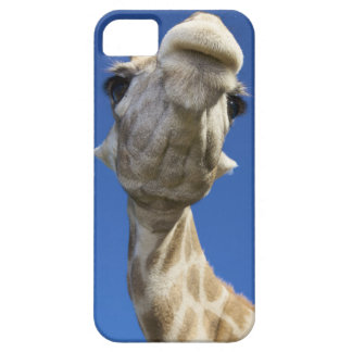 Portrait of Giraffe (Giraffa Camelopardalis) iPhone 5 Covers