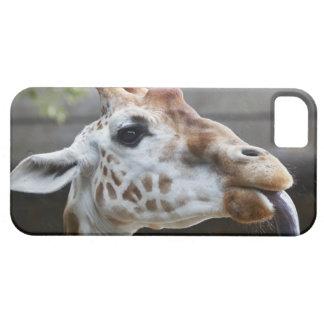 Portrait of Giraffe (Giraffa camelopardalis) iPhone SE/5/5s Case