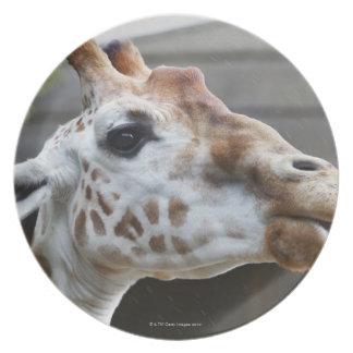 Portrait of Giraffe (Giraffa camelopardalis) Melamine Plate