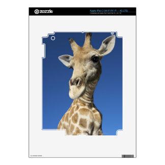 Portrait of Giraffe (Giraffa Camelopardalis) Skin For iPad 3