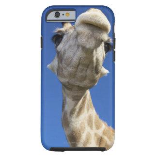 Portrait of Giraffe (Giraffa Camelopardalis) Tough iPhone 6 Case