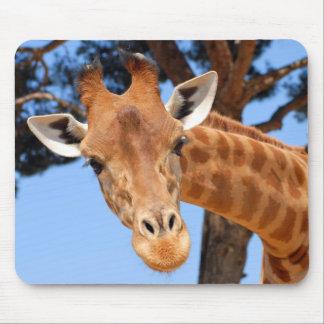 Portrait of giraffe mouse pad