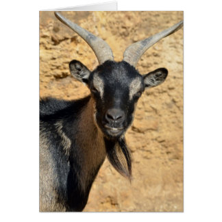 Portrait of goat card