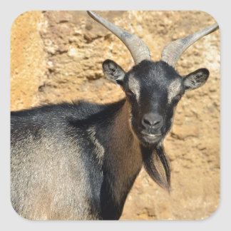 Portrait of goat square sticker