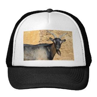 Portrait of goat trucker hat