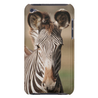 Portrait of Grevy's Zebra iPod Case-Mate Cases