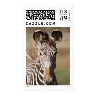 Portrait of Grevy's Zebra Postage Stamp