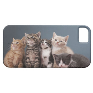 Portrait of group of kittens iPhone SE/5/5s case