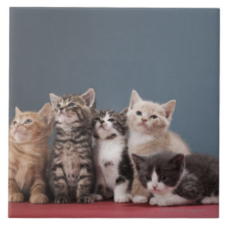 Portrait of group of kittens large square tile