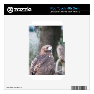 Portrait of hawk over a nature blurred background decal for iPod touch 4G