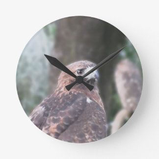 Portrait of hawk over a nature blurred background round clock