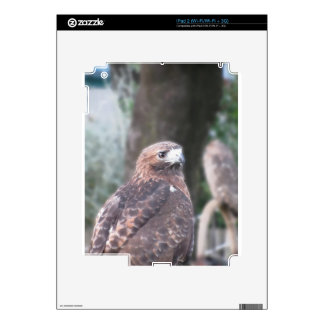 Portrait of hawk over a nature blurred background skins for the iPad 2