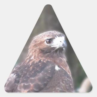Portrait of hawk over a nature blurred background triangle sticker
