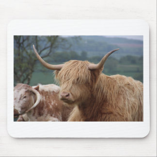 portrait of Highland Cattle Mouse Pad