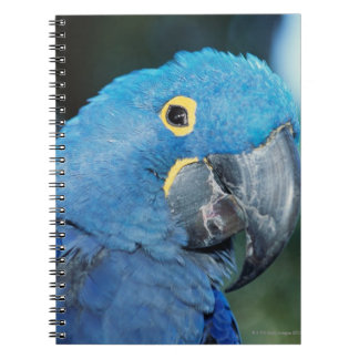 Portrait of hyacinth macaw parrot spiral notebook